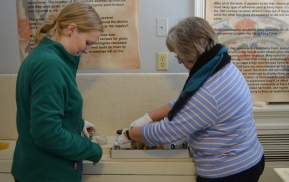Staff wear white cotton gloves to protect the artifacts from damaging oils on their hands.