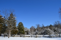 White Snow Blue Skies (10)