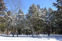 White Snow Blue Skies (14)