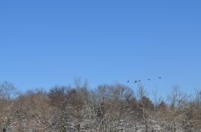 White Snow Blue Skies (7)