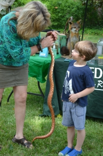 Pocket the Corn Snake was popular