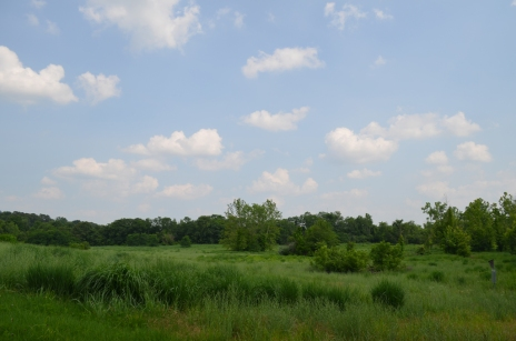 Ferry Farm's Wild Meadow