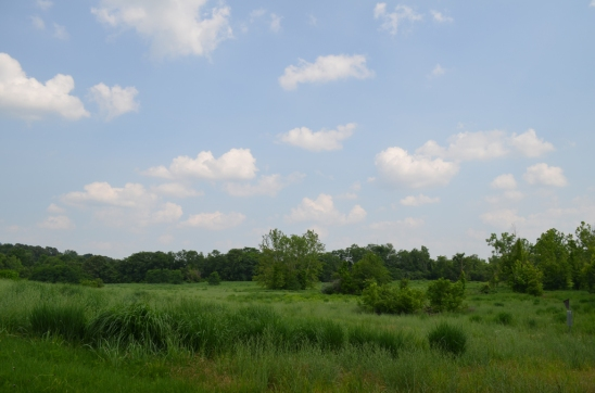 Ferry Farm's Wild Meadow