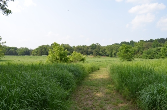 Trail through the Meadow.