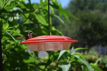Hummingbird05