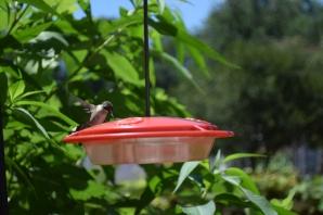 Hummingbird07