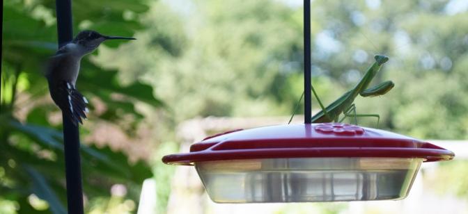 Hummingbird09
