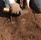 Scraping dirt into a dust pan to be screened.