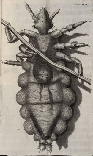 "A louse as depicted in Hooke's ""Micrographia."" Credit: National Library of Wales. Public Domain."