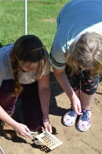Determining the soil color.