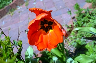 Flowers at Kenmore (8)