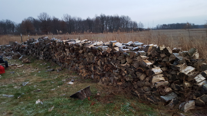 5 cords of Firewood 1