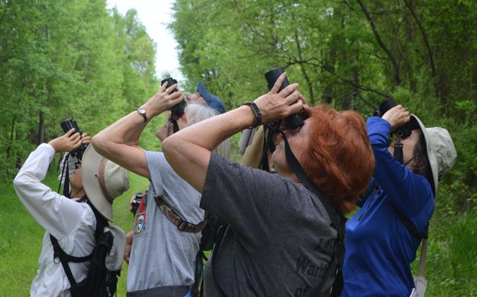 Fredericksburg Birding Club